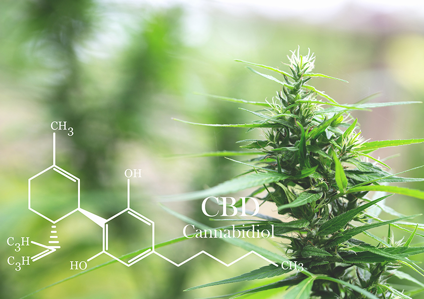 Chemistry of CBD with plant